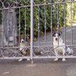 Hunde Amalfiküste